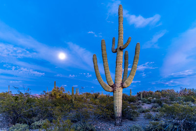 I-11 - Big  Saguaro South of Sinagua Road With Moon #2