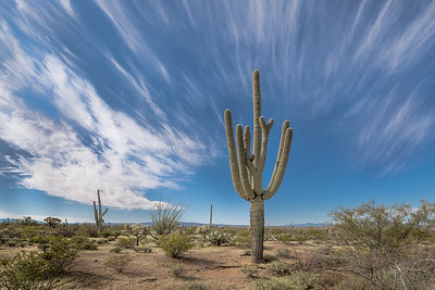 I-11 - Saguaro Framed by Cirrus