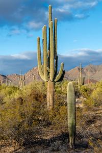 I-11 - Big  Saguaro South of Sinagua Road #7