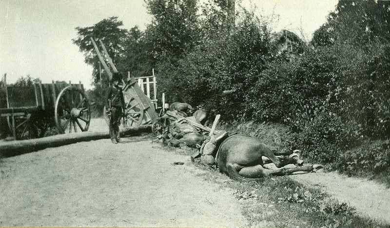 After the battle of the Silver Helmets (13 August 1914)