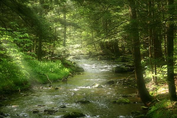 Gifts to the Forest at Sullivan County, PA
