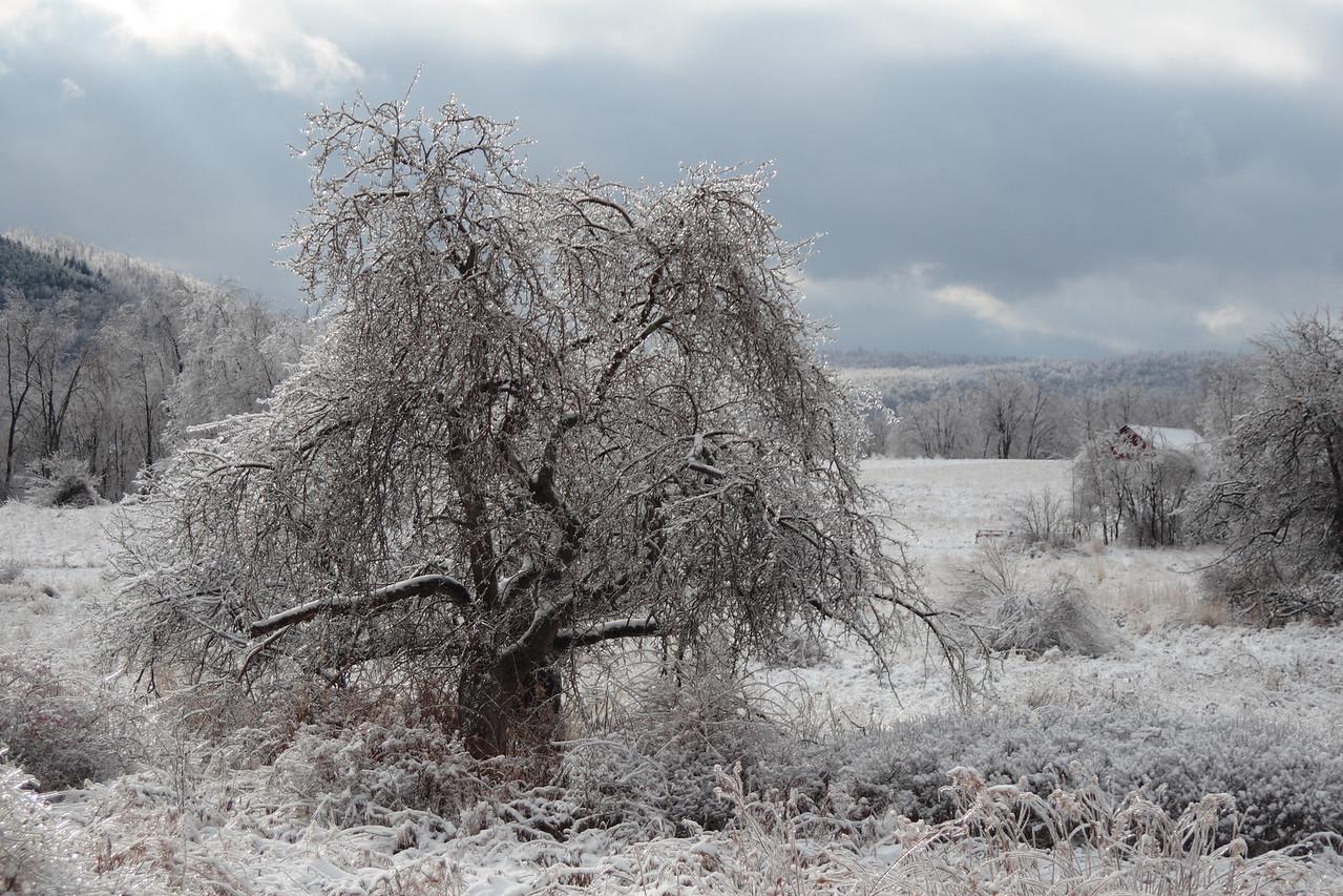 God's Christmas Tree.