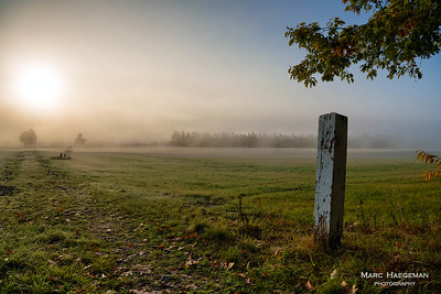 Misty morning in Wolfheze, Gelderland