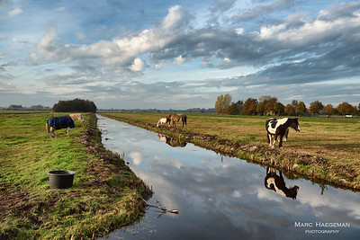 Horses near Ouderkerk on the Ijssel