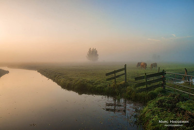 Misty autumn meadows near the Kinderdijk