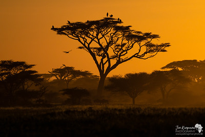 Sunset in Ndutu