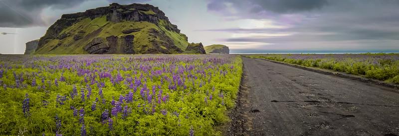Road among lupins