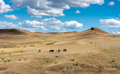 Crazy Horse's Ponies