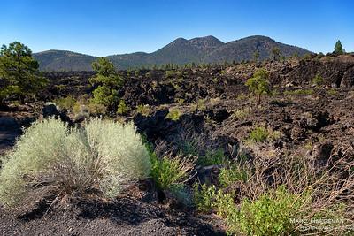 Rebirth in the Bonito Lava Flow