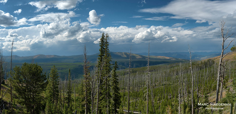 Panorama of the Yellowstone range from the slopes of Mount Washburn, still showing the scars of the 1988 fires.