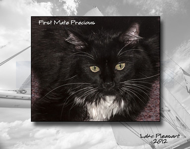 Precious - the cat who lives on the boat Miss Behaving