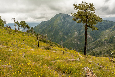 Miller Peak from Carr Peak
