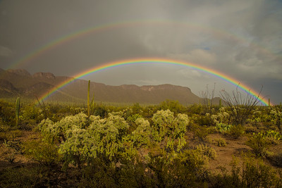 Rainbow and Cholla Cactus