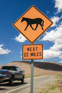 Wild Horse Warning Sign  #2