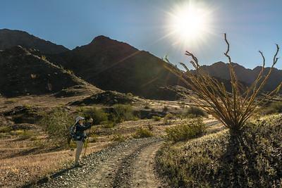 Hiker and Ocotillo With Sunburst