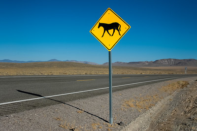 Wild Horse Warning Sign  #3
