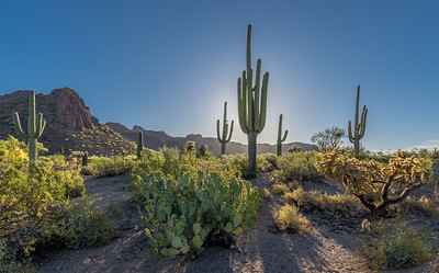 Backlit Saguaros and Panther Peak #2