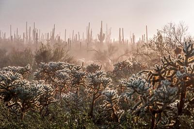 Desert Fog #1