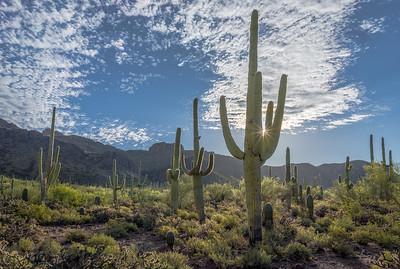 Sunburst & Saguaro