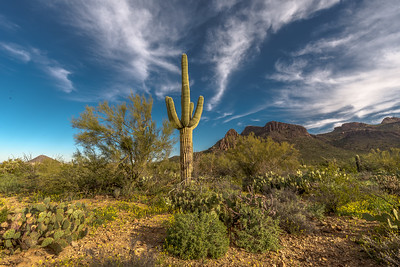 Saguaro and Cirrus Clouds