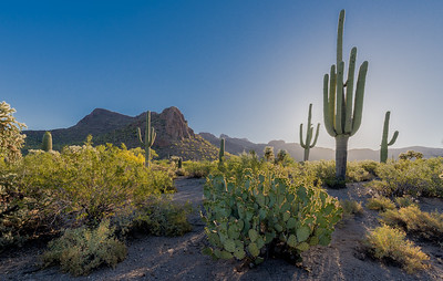 Back-lit Saguaros and Panther Peak #1