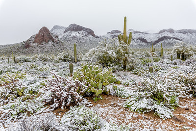 Desert Snow #4