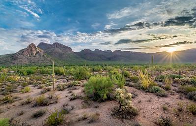 Desert Dawn #1