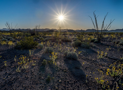 Sunburst, Southern Arizona