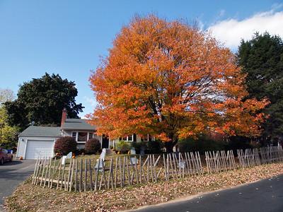 Fall Foliage_2010