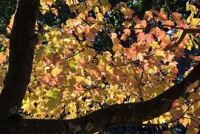 Leaves_2010