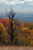 Blue Ridge Lookout - October 2012<br /> (2x3)<br /> Best Reproduction - No Larger Than 12x18