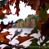 Fall Foliage through the trees on Sebago Lake - Standish, Maine<br /> FO_0022-DSCF5347