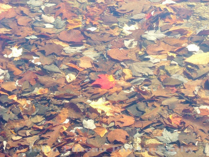 The Leaf<br /> FO_0011-DSCF5127