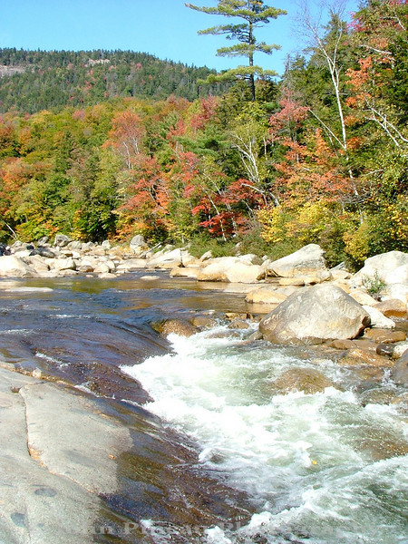Foliage along the Kankamangus Highway - Conway, New Hampshire<br /> FO_0004-4_fo
