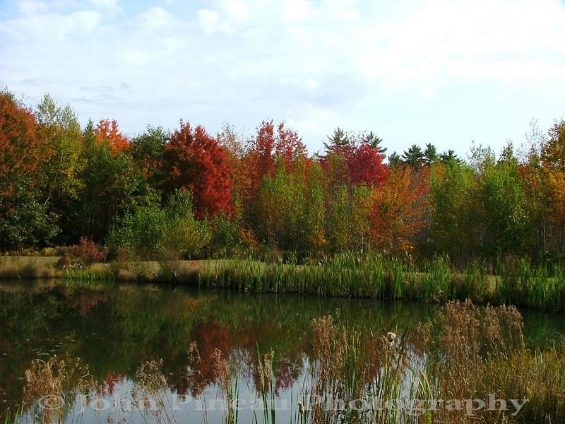 Fall Foliage - Saco, Maine<br /> FO_0002-Pic 062