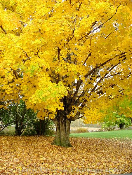 Fall Foliage - Gorham, Maine<br /> FO_0016-DSCF5230