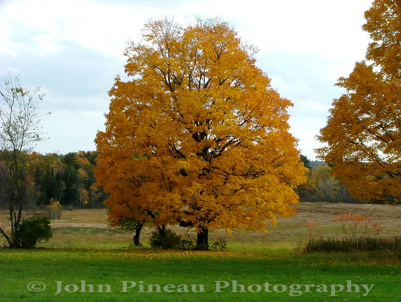 Fall Foliage - Gorham, Maine<br /> FO_0014-DSCF5213
