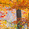Colorful Fall Foliage