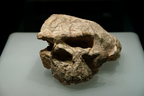 Wuhan. <br /> This skull of Homo Erectus discovered in Yunxian, Hubei Province in 1989, is in the collection of the Hubei Provincial Museum. Though distorted by earthly pressure over many millennia, it is regarded as among the most complete Middle Pleistocene hominid crania found in Asia.