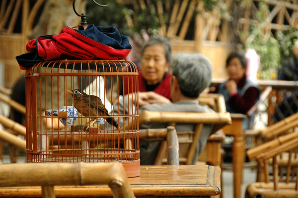 Chengdu, 2009