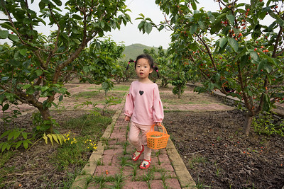 Luobie. Picking cherries. 采落别樱桃