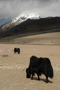 Lhasa Prefecture