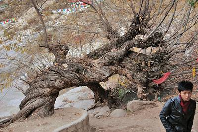 Sera kora, Lhasa, Tibet