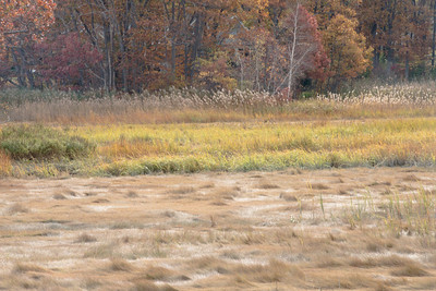 Saltmarsh Edge, Essex, MA