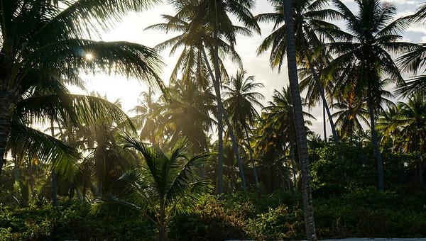 Punta Palms