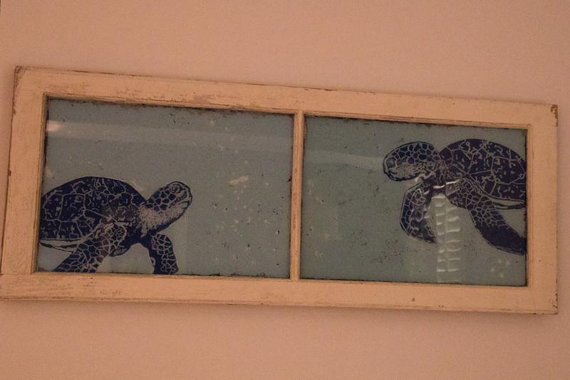 2167 Turtles  Pic