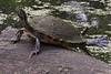 2258 Turtle