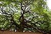 2147  Amazing Tree