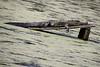 2190 alligator