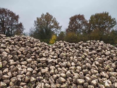novembre 2013, environs de Plobsheim, Bas-Rhin